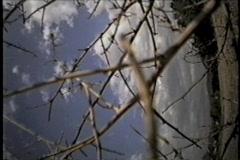 Tumbleweed Cam Stock Footage