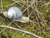 Stock Video Footage of Snail