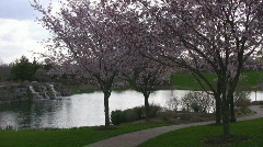 Cherry Blossom lined path and waterfall Stock Footage