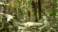 Interior of cloudforest in Ecuador Stock Footage