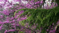 Flowering of Vorontsovsky park in Crimea. Stock Footage