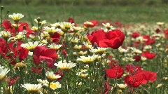 HD1080i Summer meadow with wildflower in Spain Stock Footage