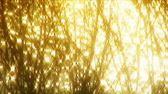 Golden dreams Stock Footage