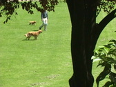 Man Walking Dog and Puppy Stock Footage