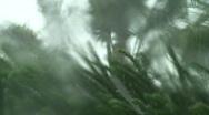 Stock Video Footage of Hurricane Rain