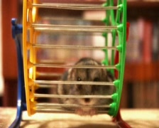 Hamster in the wheel Stock Footage