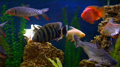 Fish exotic Stock Footage