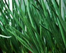 Spring onion Stock Footage