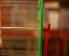 Hamster wheel Stock Footage
