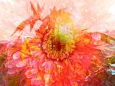 VJ Loop 022 : Pink Flower Stock Footage