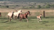 Stock Video Footage of New Mexico Horses Run Across Field-Taos