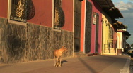 Stock Video Footage of dog passes by colorful buildings Granada, Nicaragua