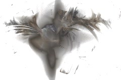 Grey feathers Stock Footage