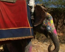 Elephant taxis for hire - stock footage