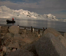 Penguins with Zodiac in Antarctica Stock Footage