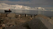 Stock Video Footage of Penguins with Zodiac in Antarctica