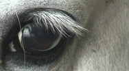 Horse Eye Closeup Stock Footage