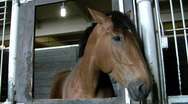 Horse twitching ears in stall Stock Footage