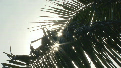 Sunlight Glittering From Coconut Leaves Stock Footage