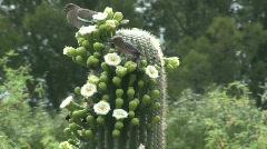 Nectar feast Stock Footage
