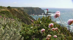 Wildflowers at the coast - stock footage