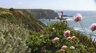 Stock Video Footage of Wildflowers at the coast