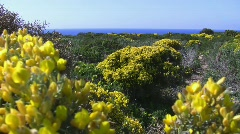 Wildflowers at the coast Stock Footage