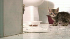 Kitten Hiding behind Wall then Hissing Stock Footage