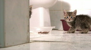 Stock Video Footage of Kitten Hiding behind Wall then Hissing