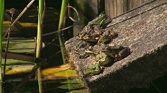 Toad/frog on moss covered stone Stock Footage