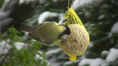 Tit in winter Stock Footage