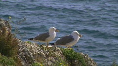 Seagulls resting Stock Footage