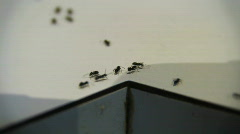 Ants Infestation HD - stock footage