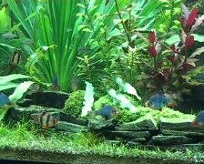 Freshwater fish tank Stock Footage