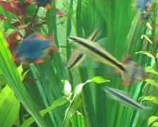 Freshwater fish tank Stock Footage