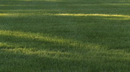 Shadows on Grass Stock Footage