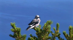 Zoom of bird and Crater Lake Stock Footage