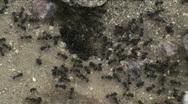 Desert ants Stock Footage