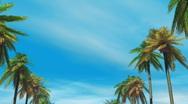 Palm tree avenue on blue sky Stock Footage