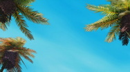 Palm-tree on blue sky  Stock Footage