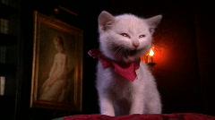 Glamour kitty (var. 1) Stock Footage