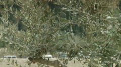 Jerusalem pan olive to church Stock Footage