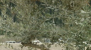 Stock Video Footage of jerusalem pan olive to church