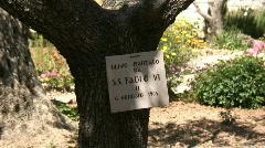 Jerusalem Gethsemane - Paolo VI olive tree Stock Footage
