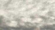 Crow in flight Stock Footage