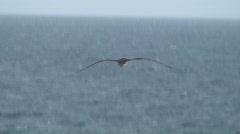 Seabird  Stock Footage