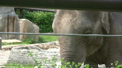 Elephant Behind Wire Fence Stock Footage