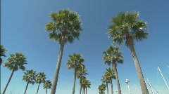 TallPalmTreeRows_lowangle.mov - stock footage