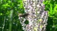 Hummingbird - HD  Stock Footage