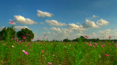 Blue sky over flower fields hdr motion time lapse Stock Footage